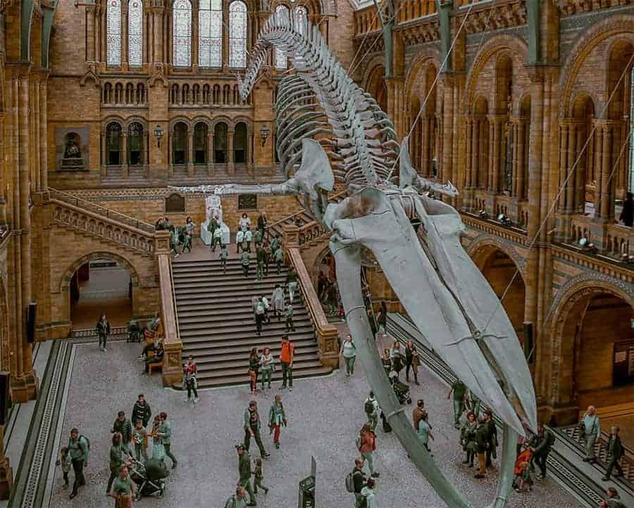 Natural-Museum-London